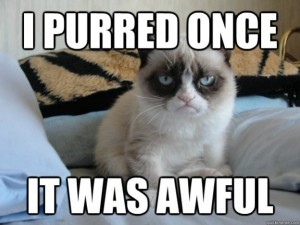 best-funniest-grumpy-cat-5