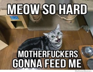 meow-so-hard-cat